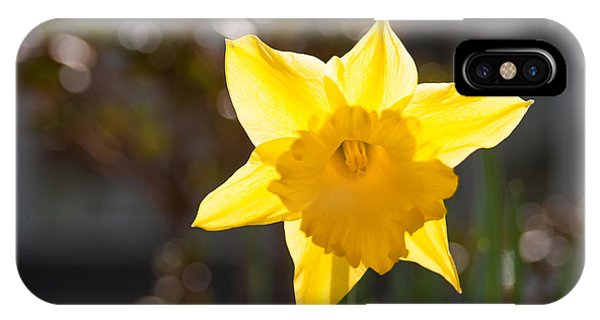 Daffodil Delight IPhone Case