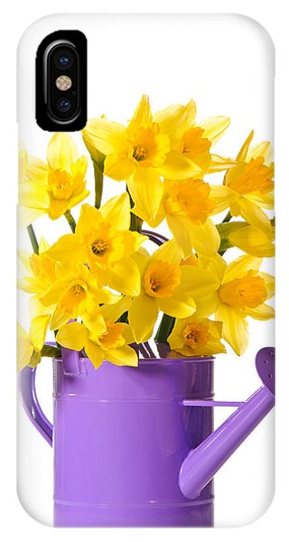Yellow Trumpet iPhone Case - Daffodil Display by Amanda Elwell