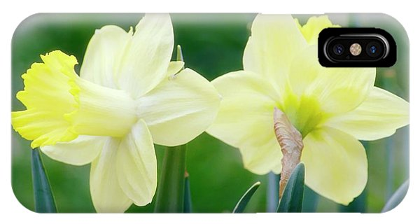 Daffodil Flowers (narcissus Sp.) Phone Case by Maria Mosolova/science Photo Library