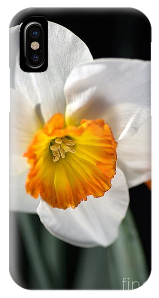 Daffodil In White IPhone Case