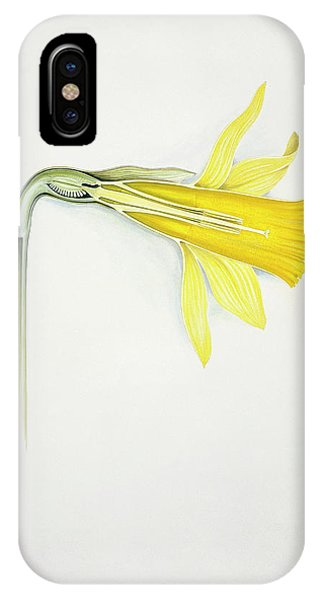 Yellow Trumpet iPhone Case - Daffodil (narcissus Pseudonarcissus) by Natural History Museum, London/science Photo Library