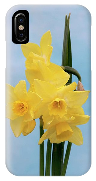 Daffodil (narcissus 'quail') Phone Case by Brian Gadsby/science Photo Library