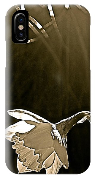 Daffodils 2 IPhone Case
