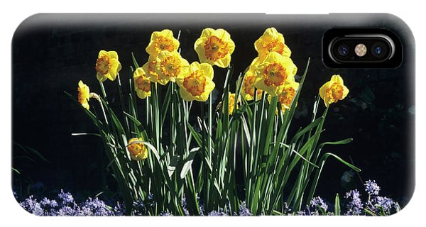 Cultivar iPhone Case - Daffodils And Bluebells by Jim D Saul/science Photo Library