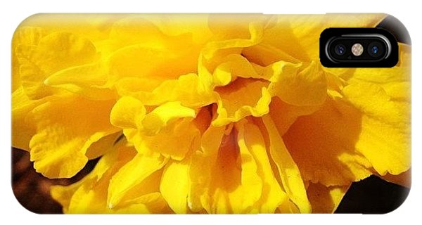 Florals iPhone Case - Daffodils Are Blooming by Christy Beckwith