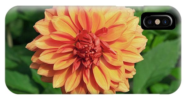 Dahlia 'askwith Lorie' Phone Case by Adrian Thomas/science Photo Library