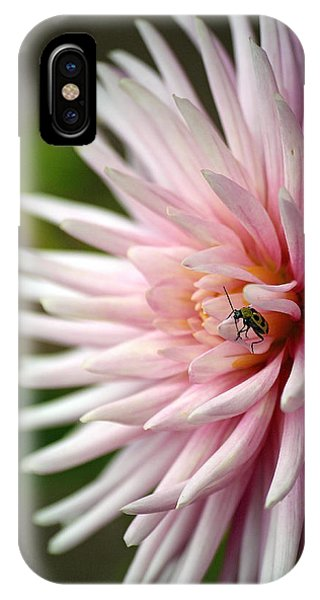 Dahlia Bug IPhone Case