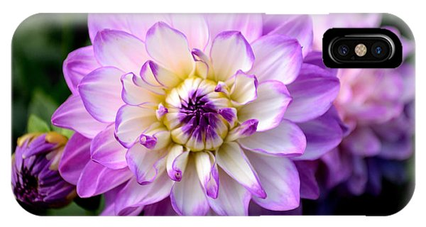 Dahlia Flower With Purple Tips IPhone Case