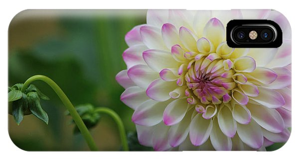 Dahlia In The Mist IPhone Case