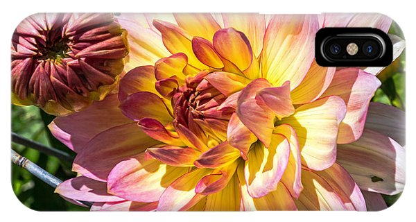 IPhone Case featuring the photograph Dahlia by Kate Brown