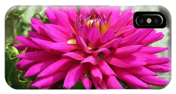 iPhone Case - Dahlia Named Andreas Dahl by J McCombie