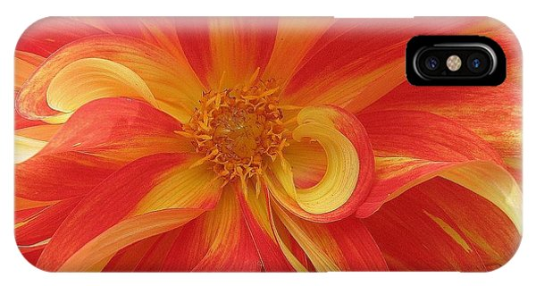 Dahlia Unfurling In Yellow And Red IPhone Case