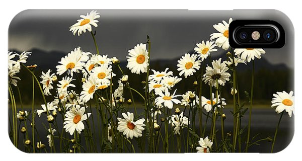 Daisies In Storm Light IPhone Case