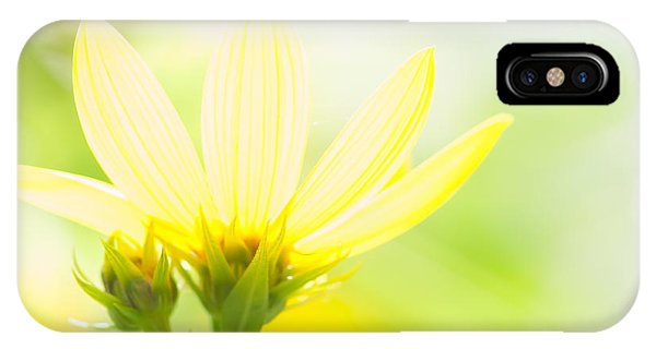 Daisies In The Sun IPhone Case
