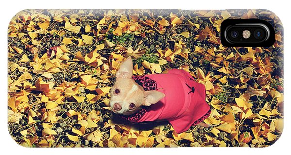 Chihuahua iPhone Case - Daisy And A Blanket Of Gold by Laurie Search