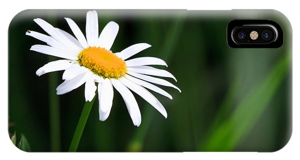 Uplift iPhone Case - Daisy - Bellis Perennis by Bob Orsillo