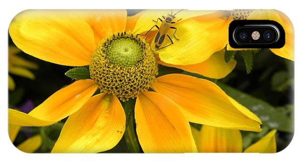 Daisy Bug Phone Case by Julie Fields