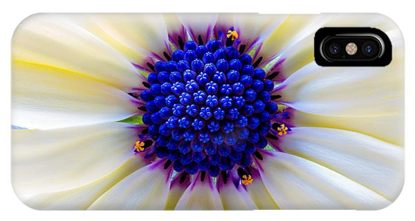 Daisy Centre IPhone Case