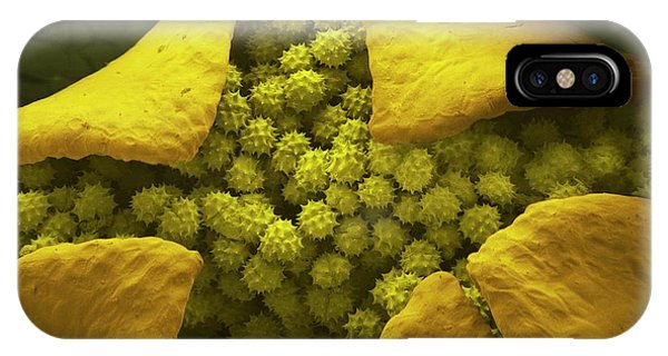 Pistil iPhone Case - Daisy Flower And Pollen by Thierry Berrod, Mona Lisa Production/ Science Photo Library