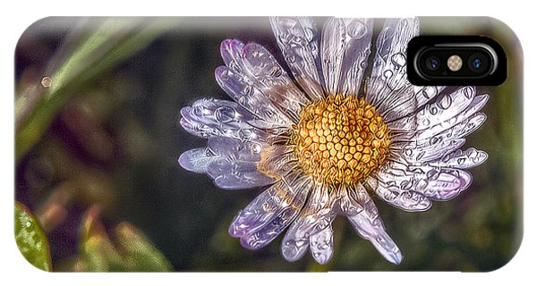Wiese iPhone Case - Daisy by Hanny Heim