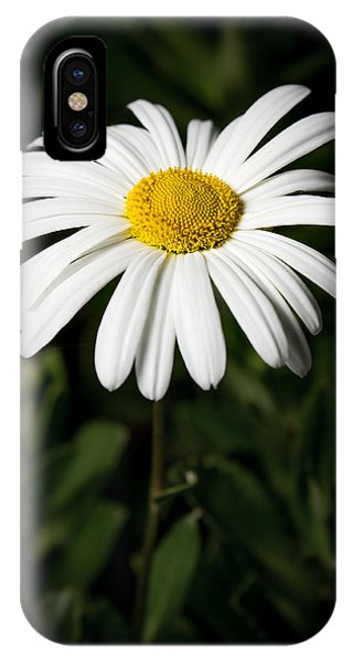 Daisy In The Garden IPhone Case