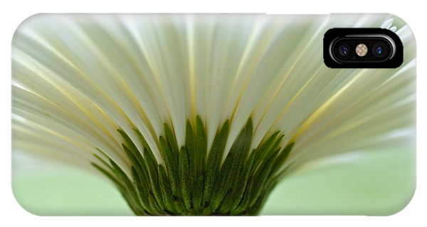 Daisy Sweetness IPhone Case