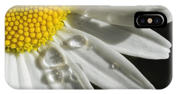 Daisy With Raindrops IPhone Case