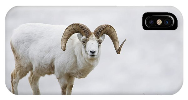 Winter iPhone Case - Dall Sheep Ram On Sheep Mountain by Milo Burcham