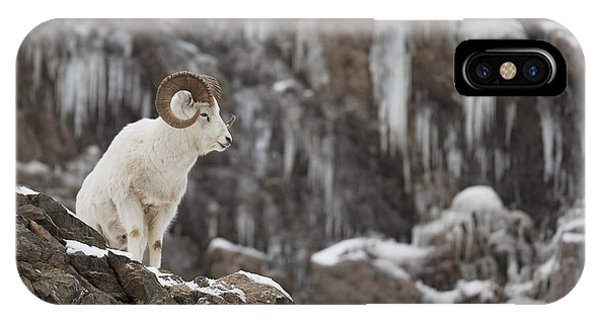 Winter iPhone Case - Dall Sheep Ram Stands On A Rocky Cliff by Doug Lindstrand
