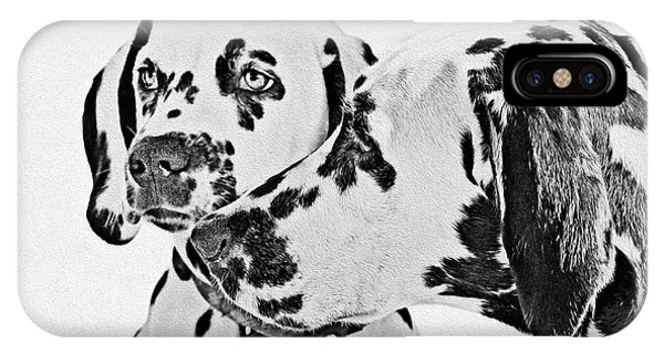 Dalmatians - A Great Breed For The Right Family IPhone Case