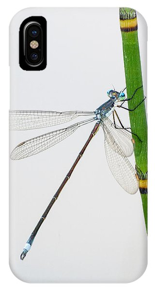 Damselfly On Horsetail IPhone Case