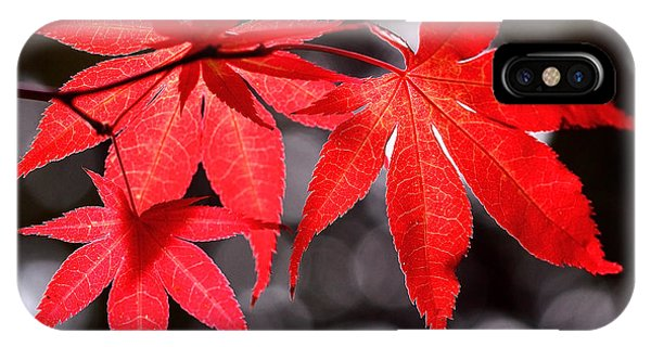 Dancing Japanese Maple IPhone Case