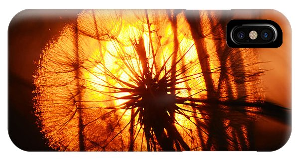 Dandelion At Sunset IPhone Case