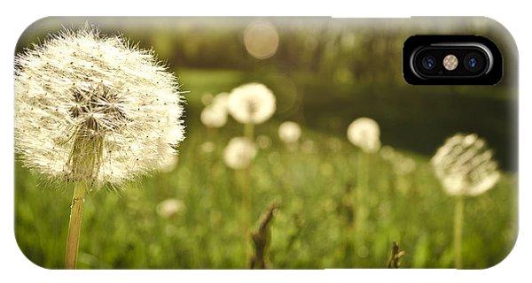 Dandelion Basking In The Sun IPhone Case