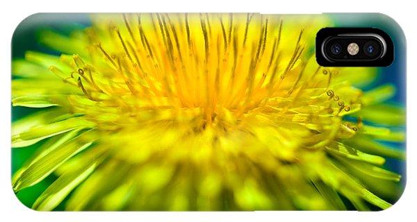 Yellow iPhone Case - Dandelion Bloom  by Iris Richardson