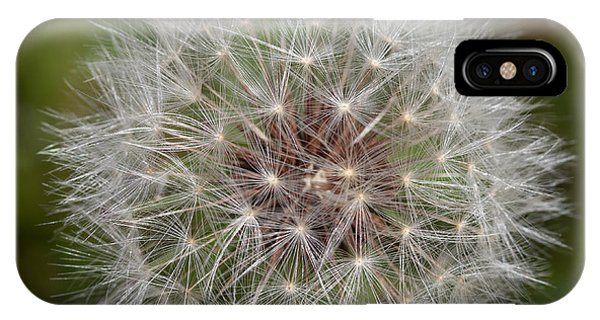 Dandelion Clock IPhone Case