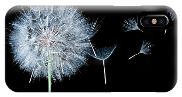 Dandelion Dreaming IPhone Case