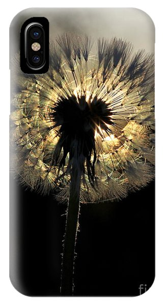 Dandelion Sunrise - 1 IPhone Case