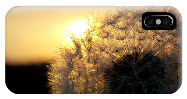 Dandelion Sunset IPhone Case