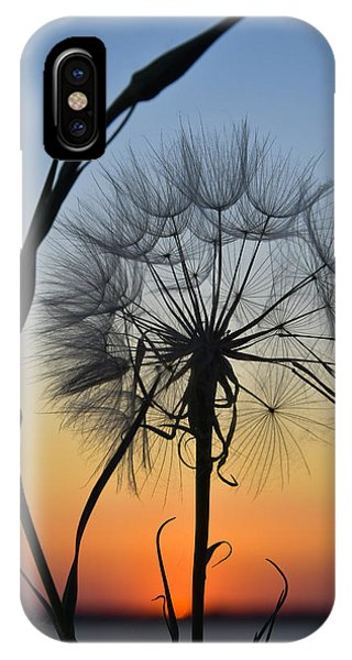 Dandy Lion IPhone Case