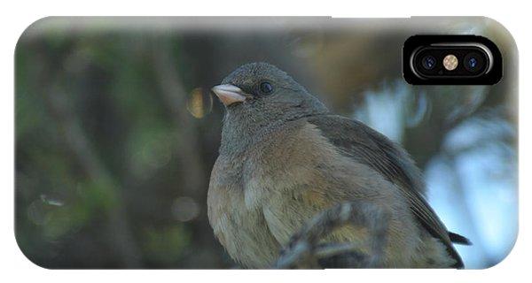 Dark-eyed Junco IPhone Case