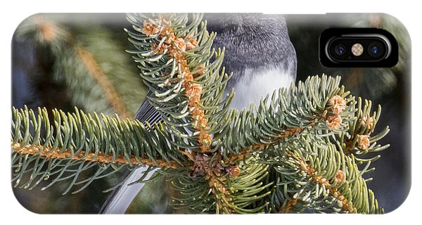 Dark-eyed Junco  Phone Case by Ricky L Jones