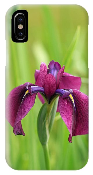 Dark Magenta Iris IPhone Case