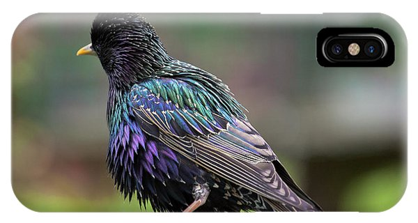 Darling Starling IPhone Case