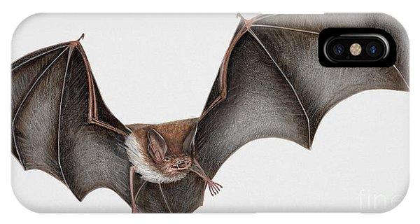 Daubentons Bat Myotis Daubentonii - Murin De Daubenton-murcielago Ribereno-vespertilio Di Daubenton IPhone Case