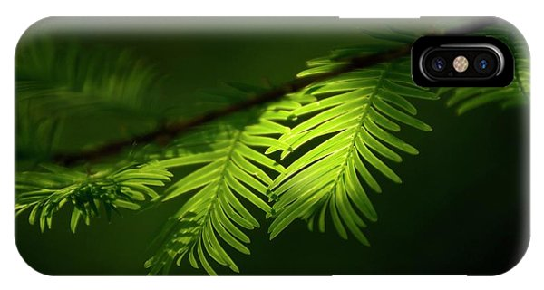 iPhone Case - Dawn Redwood Foliage by Simon Fraser/science Photo Library