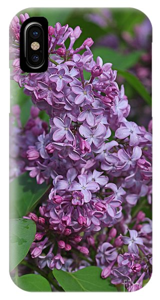 Dawns Lilacs IPhone Case