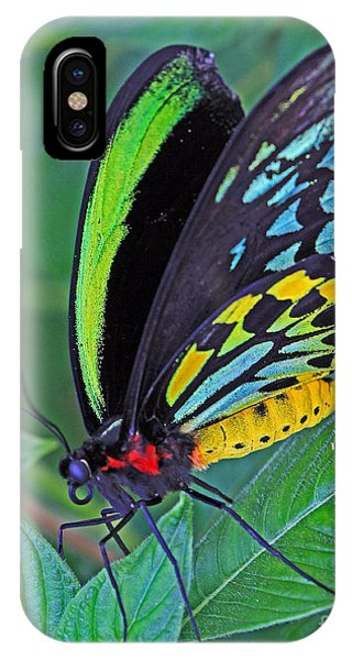 Day-glo Butterfly IPhone Case