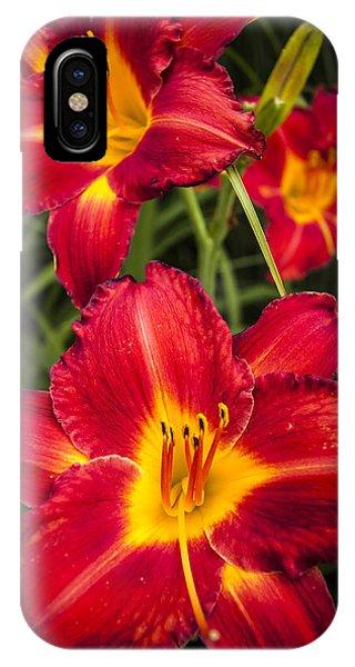 Stamen iPhone Case - Day Lilies by Adam Romanowicz