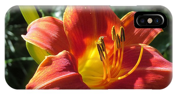 Day Lily 1 IPhone Case